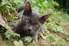 Black cat thailand. Is playing on the ground at garden royalty free stock photos
