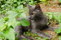 Black cat thailand. Is playing on the ground at graden stock photo