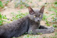 Black cat thailand. Sleep on the ground Royalty Free Stock Images