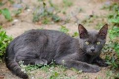Black cat thailand. Sleep on the ground Stock Images