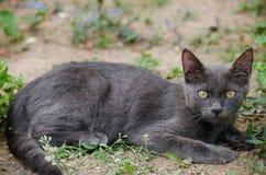 Black cat thailand. Sleep on the ground Royalty Free Stock Image