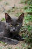 Black cat thailand. Sleep on the ground Royalty Free Stock Photo