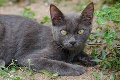 Black cat thailand. Sleep on the ground Stock Photography