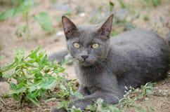 Black cat thailand. Sleep on the ground Stock Photo