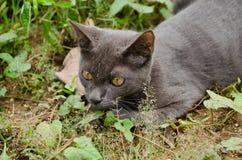 Black cat thailand. Sleep on the ground Stock Image
