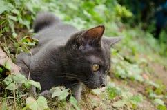 Black cat thailand. Sleep on the ground Stock Photos