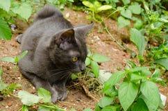 Black cat thailand. Sleep on the ground Royalty Free Stock Photography