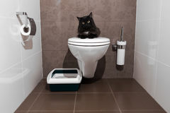 Black cat on the toilet. Black cat sitting on the human toilet instead of his Royalty Free Stock Image