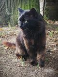 A black cat stock image