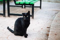 Black cat with torn ear sitting near green bench in the park royalty free stock photography