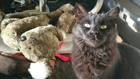 Black cat. Toy koala eyes squint Royalty Free Stock Photo