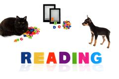 Black cat and toy-terrier puppy with electronic book Stock Image