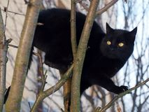 Black cat on the tree. Cute black cat climbing on the tree stock images