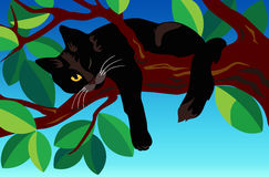 Black cat on a tree. Stock Photos