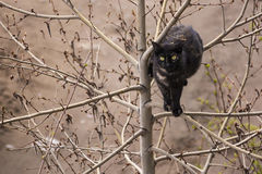 Black cat on the tree royalty free stock photo