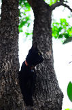 Black cat on tree in garden Stock Images
