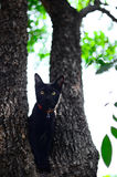 Black cat on tree in garden Royalty Free Stock Image