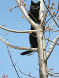 Black cat in tree Royalty Free Stock Image