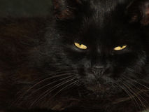 Black cat with two little yellow eyes Stock Photo