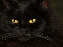 Black cat with two  yellow eyes. On black background Royalty Free Stock Images