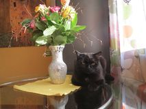 Black cat and vase with flowers. Still life with black cat and vase with flowers on the table spring bouquet Stock Image
