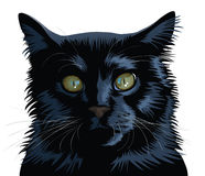 Black Cat. Vector black cat  on a white background Stock Photos