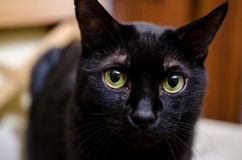 Black cat. Very sad black cat looking at the camera stock images