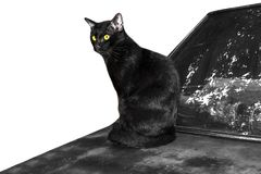Black cat on vintage car to creative for design and decoration stock image