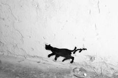 Black cat walking away in the street Royalty Free Stock Photos