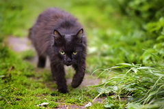 Black cat walking on the footpath Stock Photo