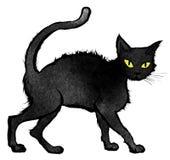Black Cat walking and looking at the camera Stock Photo