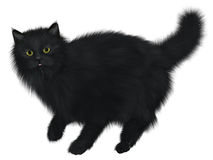 Black Cat Walking Stock Photo