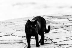 A black cat walking on a pier on Trasimeno lake Umbria. A black cat walking on a pier on Trasimeno lake Royalty Free Stock Image