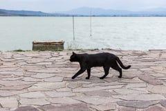 A black cat walking on a pier on Trasimeno lake Umbria. A black cat walking on a pier on Trasimeno lake Stock Image