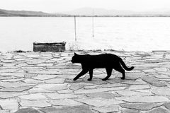 A black cat walking on a pier on Trasimeno lake Umbria. A black cat walking on a pier on Trasimeno lake Royalty Free Stock Images