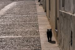 Black cat walking through the streets of the island of Tabarca Royalty Free Stock Photos