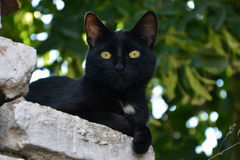 Black cat. On the wall royalty free stock image