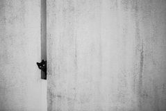 Black cat. Watching curiously from a hole on a white wall royalty free stock photography