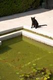 Black cat watching fish Royalty Free Stock Photos