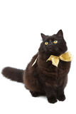 Black cat wearing bow isolated Stock Photos
