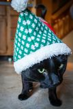 Black cat wearing christmas costume royalty free stock photos