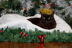 A black cat wearing a crown of golden Christmas tinsel. stock photo