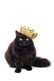 Black cat wearing golden crown isolated. On white Royalty Free Stock Photo
