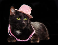 Black cat wearing pink hat and beads isolated. Glamorous black cat wearing pink hat and beads lying against black background isolated Royalty Free Stock Photo