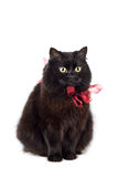 Black cat wearing red bow isolated Royalty Free Stock Photos