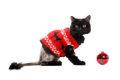 Black cat wearing in a red cardigan with Christmas Ball Stock Photo