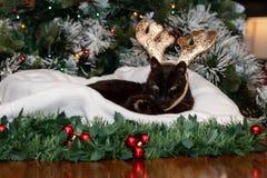 A black cat wearing reindeer antlers. royalty free stock image
