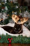 A black cat wearing reindeer antlers and sitting quietly on a white cushion. stock image