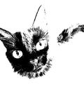 Black cat. In black and white Royalty Free Stock Photo