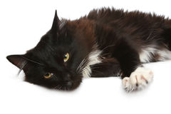 Black cat on a white background. Black cat in front of a white background stock image